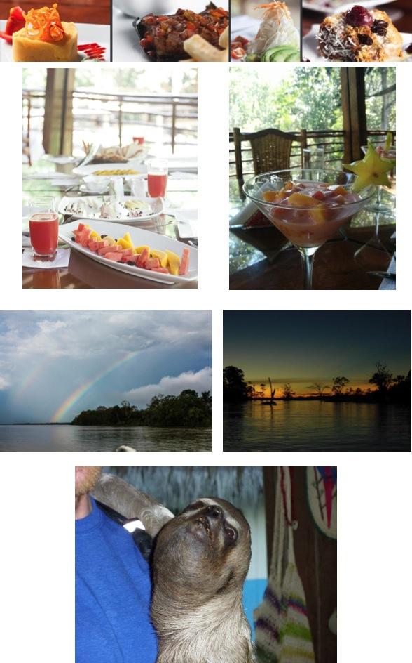 amazon rainforest plants collage. amazontreehouselodgepic13jpg amazon rainforest plants collage t