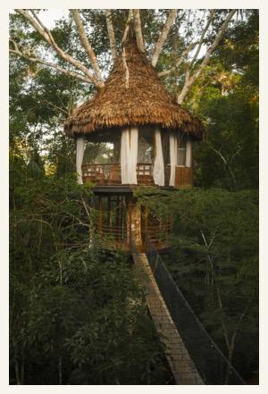 treehouse lodge amazon tour