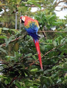 macaw amazon tour